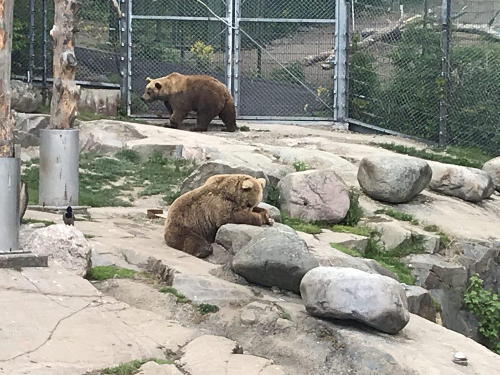 Korkeasaaren uudet leikkipaikat. Karhut virkeinä Korkeasaaressa.