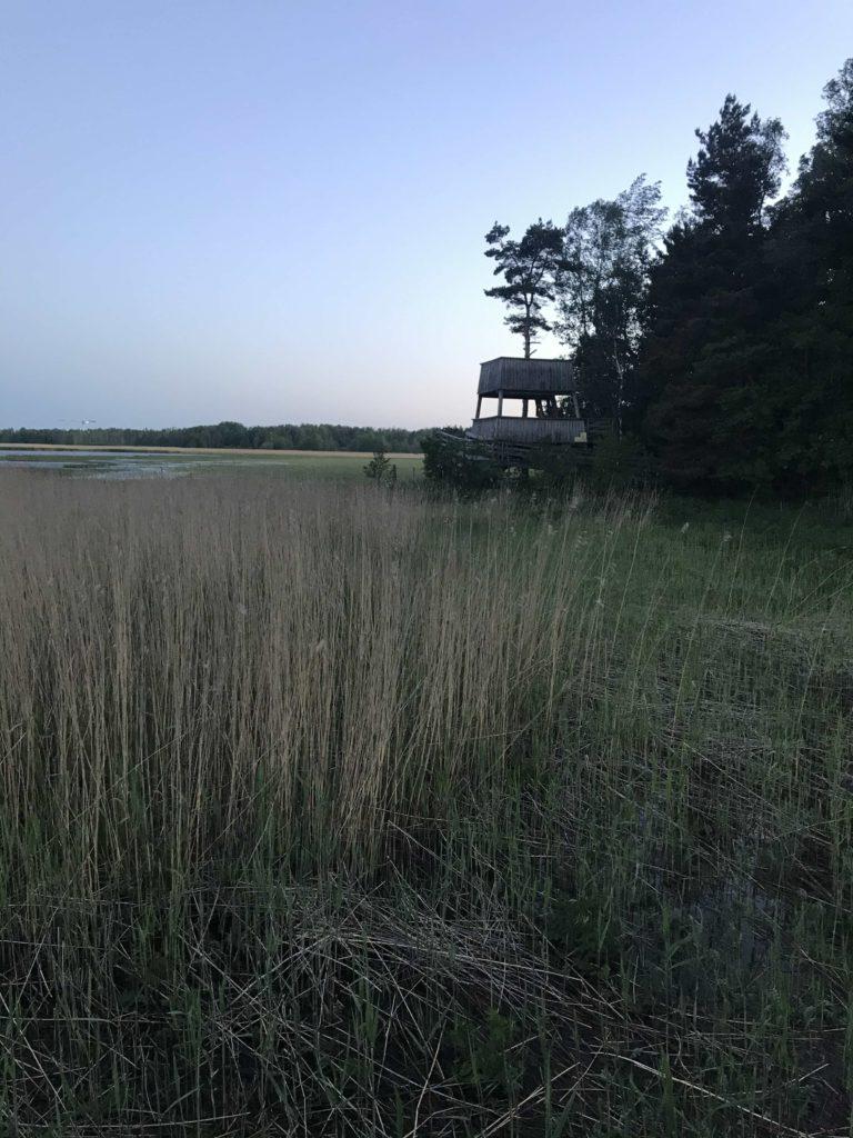 Villa Elfvikin kosteikko ja lintutorni.