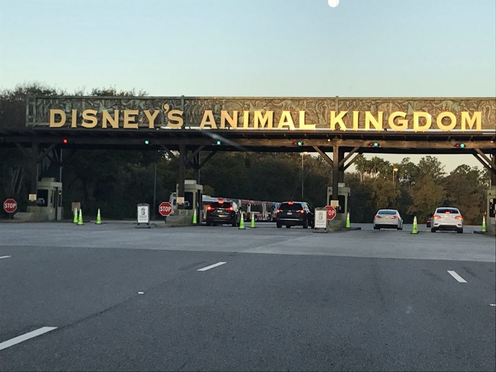 Disneyn Animal Kingdom.