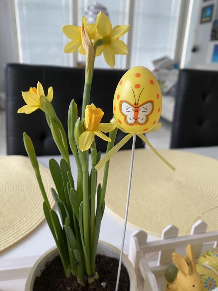 Pääsiäinen. Narssissit löytävät pöytään pääsiäisenä.